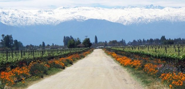 maipo-valley-chile-urban-flavours