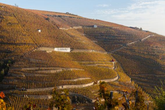 GUIGAL_Turque_vineyard-cote-rotie-rhone-urban-flavours