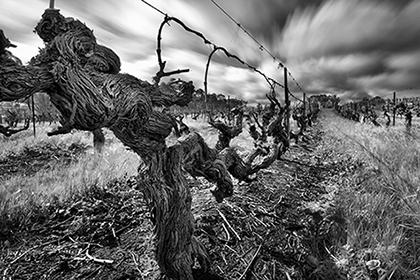 old-vines-mclaren-vale-australia-urban-flavours
