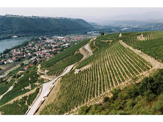 Guigal-Chateau-dAmpuis-Cote-Rotie-La-Viara-Syrah-Vineyards-Rhone-lanscape-view-river-urban-flavours