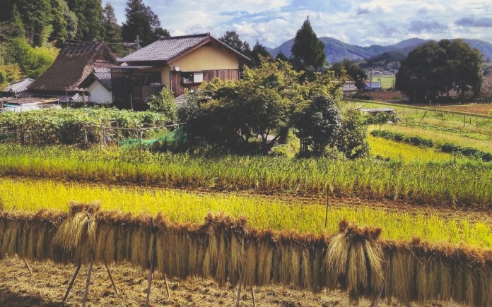 natural-farming-urban-flavours