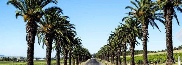 seppeltsfield-road-barossa-valley-urban-flavours