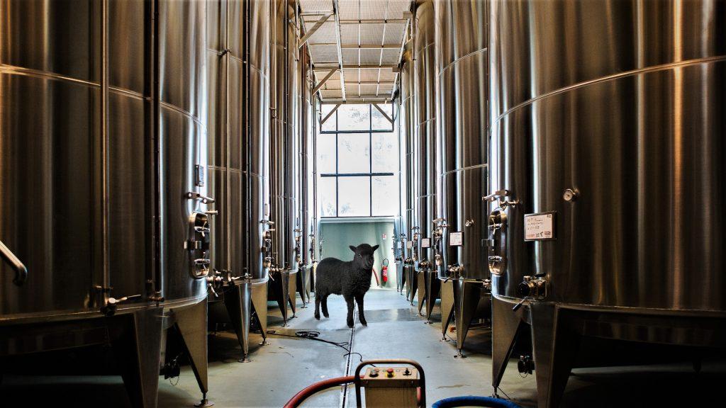 black-sheep-vats-le-grand-noir-wine-vindochine-darren-gall